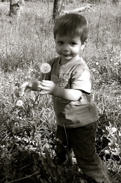 This little guy loves his dandelion mama!